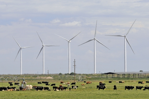 The Wildcat Wind farm