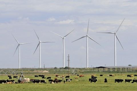 The Wildcat Wind farm