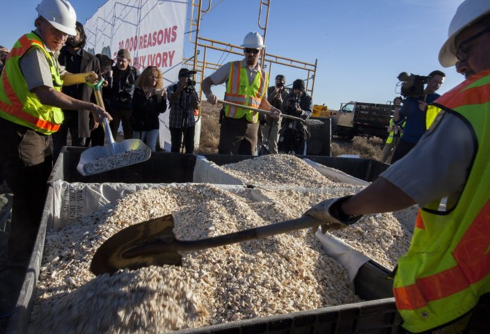 United States destroys confiscated ivory stockpile.